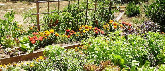 5 consejos para ahorrar y optimizar tiempo en el cuidado del jard n - Cuidado de jardines ...